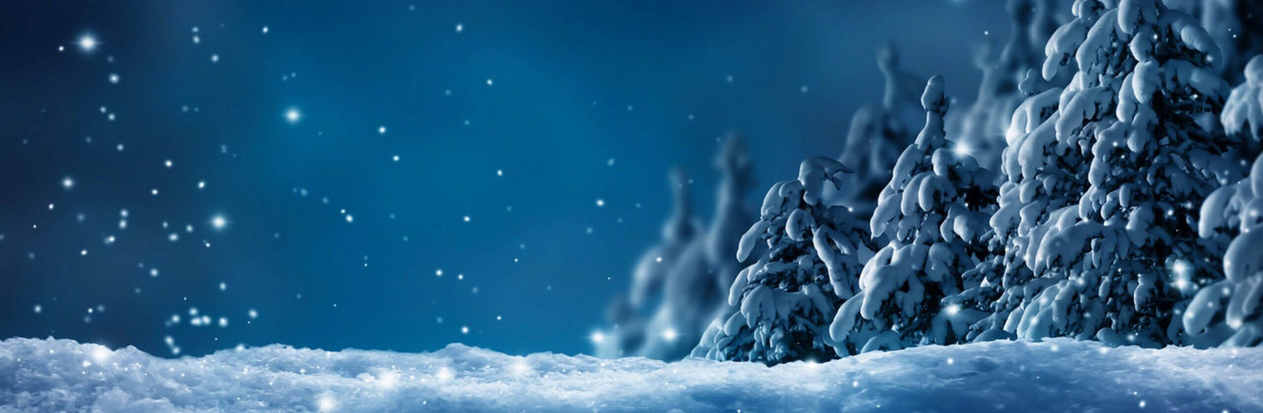 snowy winter forest by night